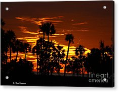 Orange Skies Acrylic Print