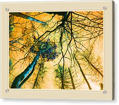 Orange Sky Tree Tops Acrylic Print by Felipe Adan Lerma