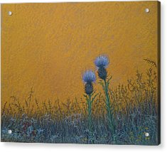 Orange Sky With Thistle Acrylic Print