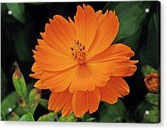 Orange Smile Acrylic Print