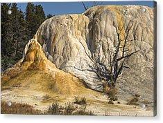Orange Spring Mound Acrylic Print by Loree Johnson
