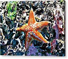 Orange Starfish Acrylic Print