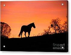Orange Sunrise Acrylic Print by Stephanie Laird