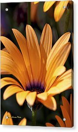 Orange Symphony Acrylic Print