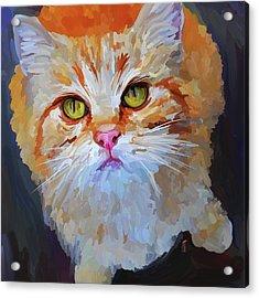 Orange Tabby Cat - Square Acrylic Print by Jai Johnson