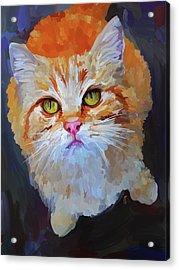 Orange Tabby Cat Acrylic Print by Jai Johnson