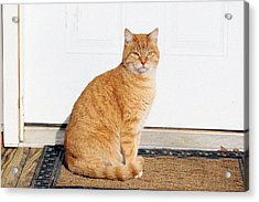 Acrylic Print featuring the digital art Orange Tabby Cat by Jana Russon