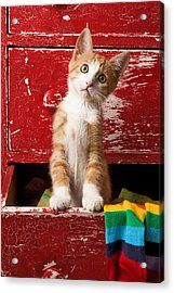 Orange Tabby Kitten In Red Drawer  Acrylic Print