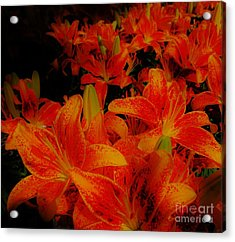 Spicey Tiger Lilies Acrylic Print