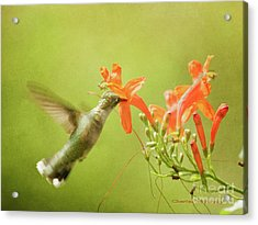 Acrylic Print featuring the photograph Orange Treat by Charles McKelroy
