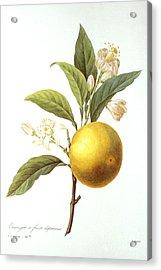 Orange Tree Acrylic Print by Granger