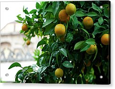 Orange Tree Acrylic Print