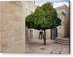 Acrylic Print featuring the photograph Orange Tree by Marji Lang
