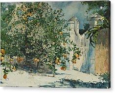 Orange Trees And Gate Acrylic Print
