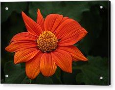 Orange You Pretty Acrylic Print