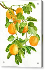 Oranges On A Branch Acrylic Print by Sharon Freeman