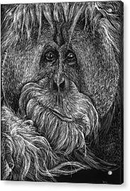Orangitan Acrylic Print