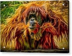 Orangutan Inspiration Acrylic Print