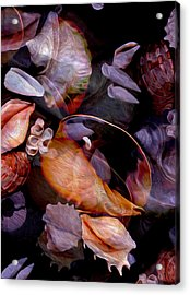 Orbiting Seashells Acrylic Print