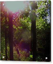 Orbs In The Forest Acrylic Print
