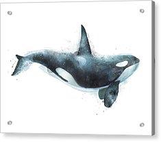 Orca Acrylic Print by Amy Hamilton