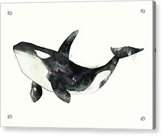 Orca From Arctic And Antarctic Chart Acrylic Print