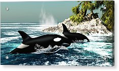 Orca Killer Whales Acrylic Print by Corey Ford