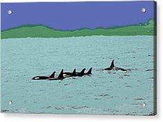 Orca Pod Acrylic Print by Al Bourassa