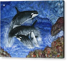 Orcas Family Frolicks Acrylic Print by Tanna Lee M Wells