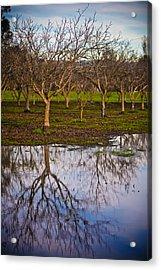 Orchard IIi Acrylic Print by Derek Selander
