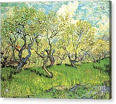 Orchard In Blossom 2 Acrylic Print by Vincent Van Gogh