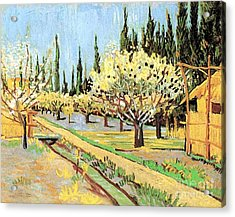 Orchard In Blossom, Bordered By Cypresses Acrylic Print by Vincent Van Gogh