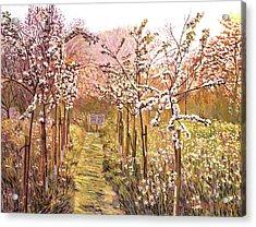 Orchard Morning Acrylic Print by David Lloyd Glover