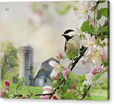Orchard Visitor Acrylic Print by Lori Deiter