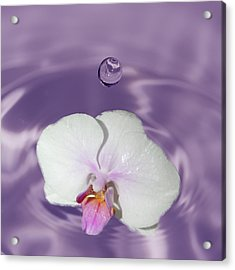 White Orchid Water Drop Acrylic Print