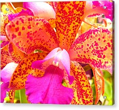 Orchid 1 Acrylic Print by Evguenia Men