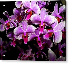 Orchid 12 Acrylic Print by Marty Koch