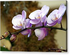 Orchid 18 Acrylic Print by Marty Koch