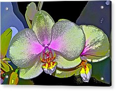 Orchid 2 Acrylic Print by Pamela Cooper