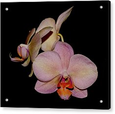 Orchid 2016 1 Acrylic Print by Robert Morin