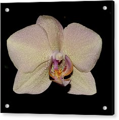 Orchid 2016 2 Acrylic Print by Robert Morin