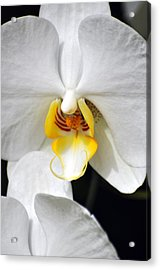 Orchid 23 Acrylic Print by Marty Koch