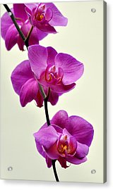Orchid 26 Acrylic Print by Marty Koch