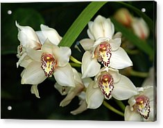 Orchid 3 Acrylic Print by Marty Koch