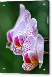 Orchid 30 Acrylic Print by Marty Koch