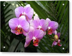 Orchid 4 Acrylic Print by Marty Koch