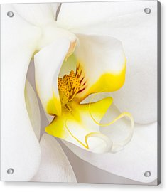 Orchid 4 Acrylic Print