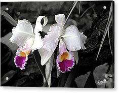 Orchid #5501 Inimitable Flower Acrylic Print