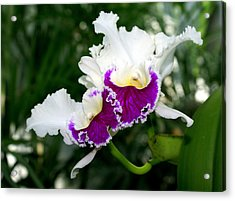 Orchid 6 Acrylic Print by Marty Koch