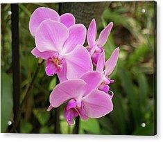 Orchid #6 Acrylic Print